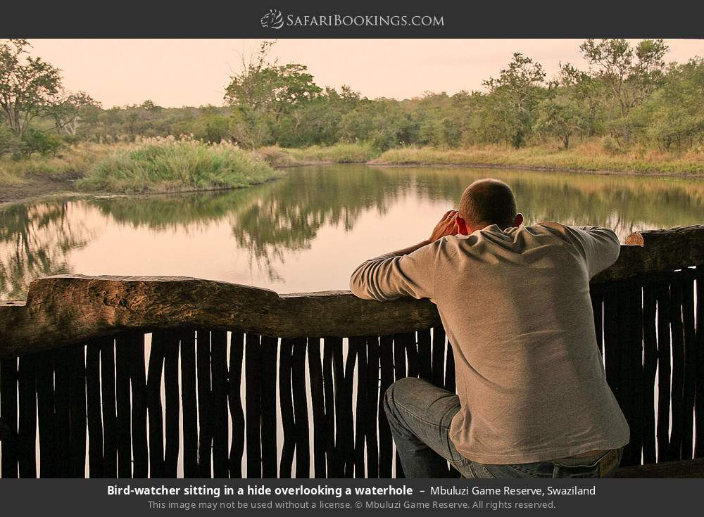 Tourist sitting in a bird hide overlooking a waterhole in Mbuluzi Game Reserve, Swaziland