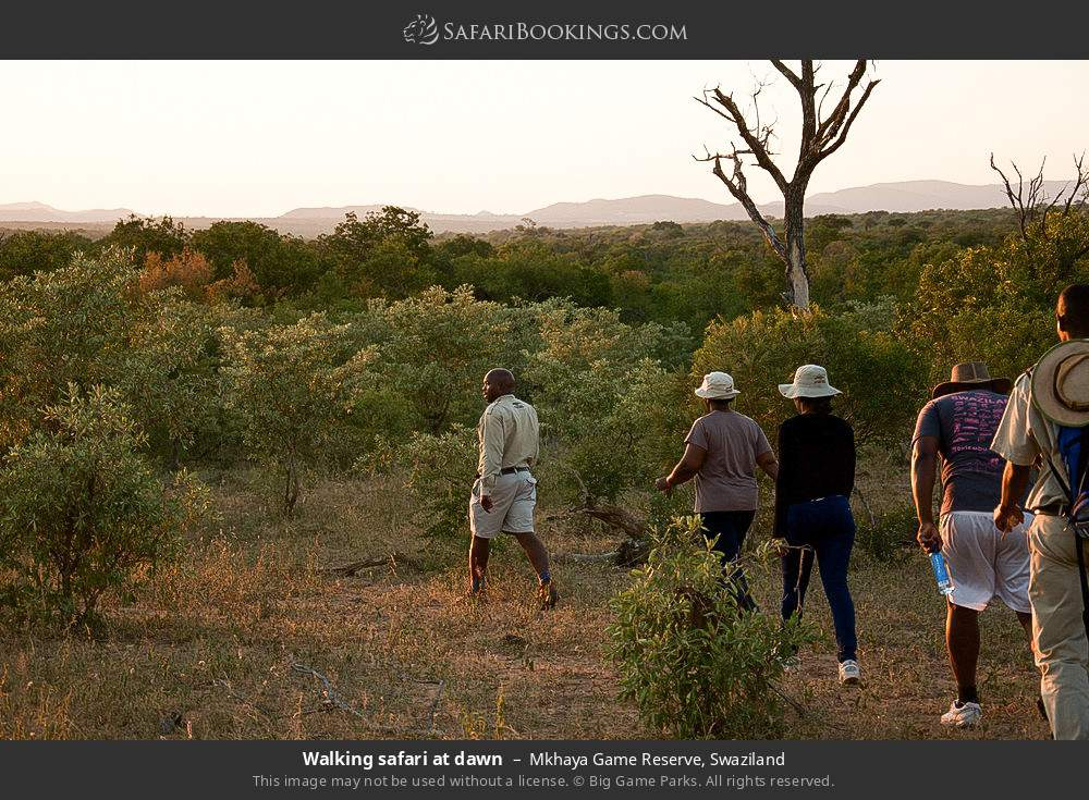 Walking safari at dawn in Mkhaya Game Reserve, Swaziland