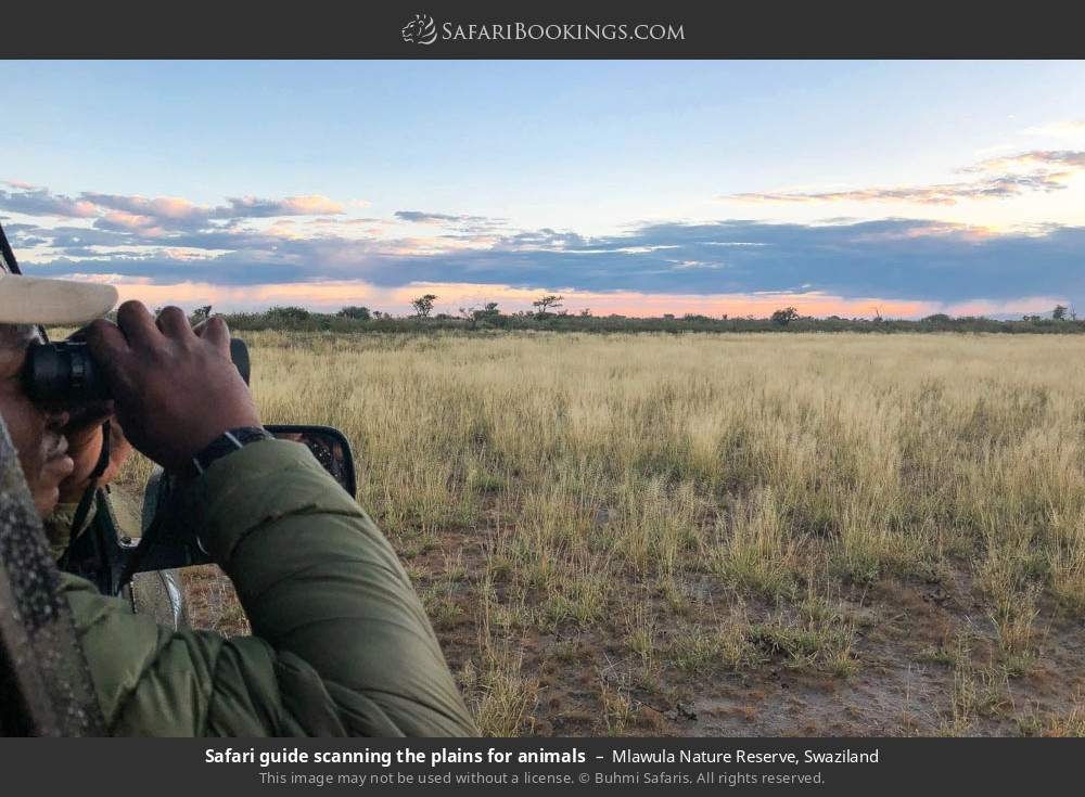 Safari guide scanning the plains for animals in Mlawula Nature Reserve, Swaziland