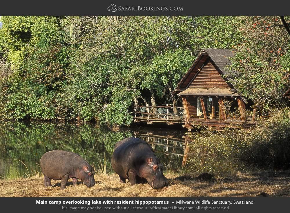 Main camp overlooking lake with resident hippopotamus in Mlilwane Wildlife Sanctuary, Swaziland