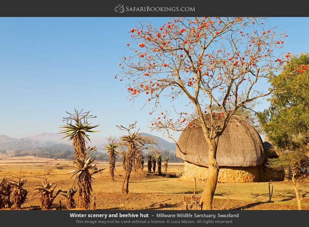 Winter scenery and beehive hut in Mlilwane Wildlife Sanctuary, Swaziland