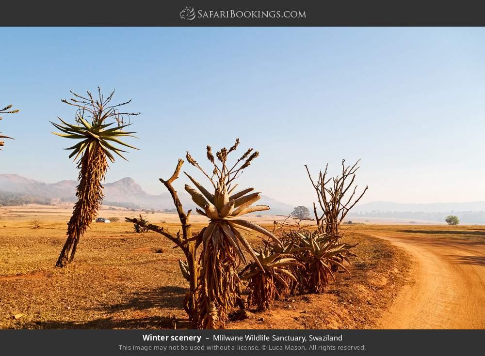Winter scenery in Mlilwane Wildlife Sanctuary, Swaziland