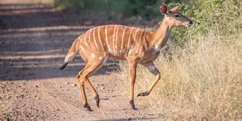 3-Day Azure Masai Mara Road Safari