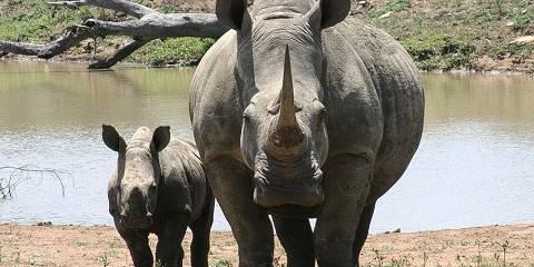 9-Day Zambezi-Chobe-Okavango Safari, Incl Victoria Falls