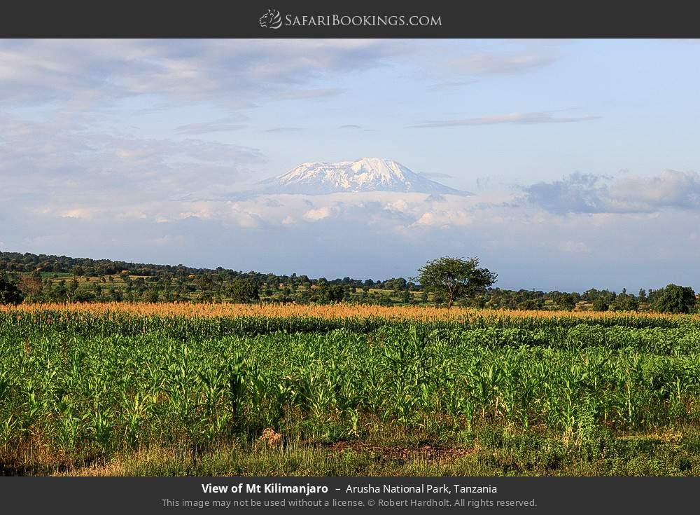 View of Mount Kilimanjaro in Arusha National Park, Tanzania