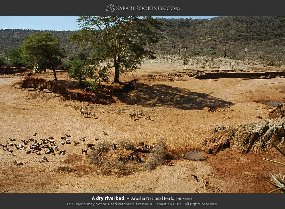 A dry riverbed in Arusha National Park, Tanzania