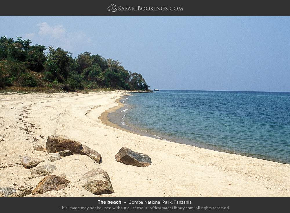 The beach in Gombe National Park, Tanzania