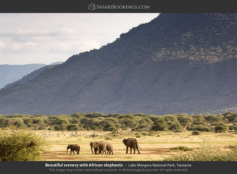 Beautiful scenery with African elephants in Lake Manyara National Park, Tanzania
