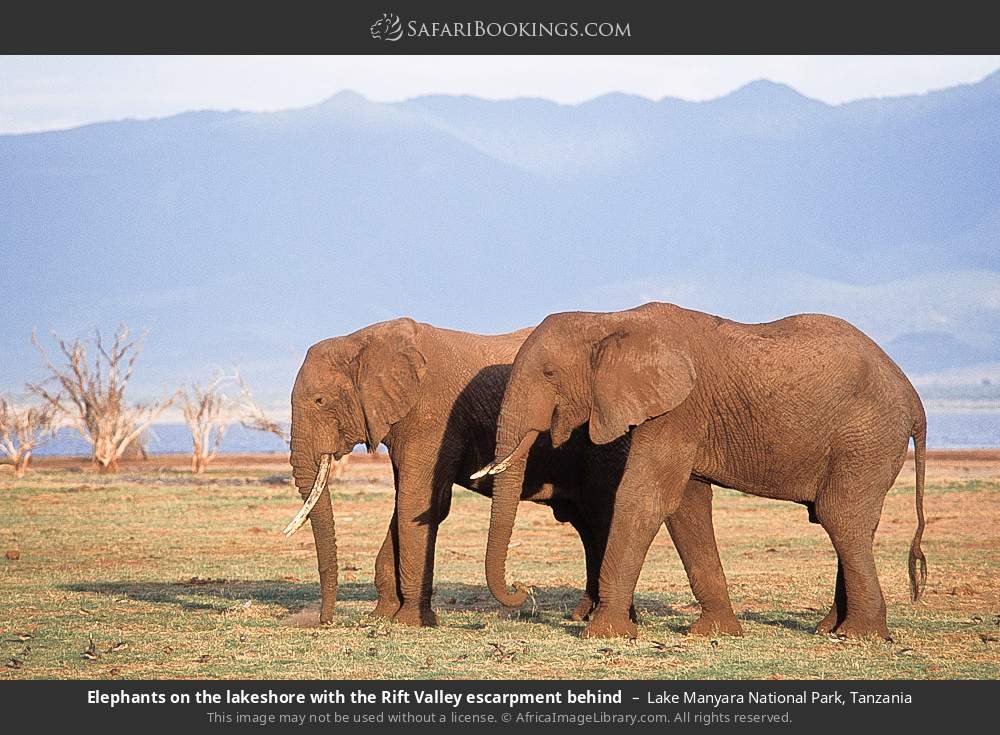 Elephants on the lake shore with the Rift Valley escarpment behind in Lake Manyara National Park, Tanzania