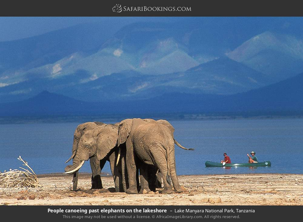 Tourists canoeing past some elephants on the lake in Lake Manyara National Park, Tanzania