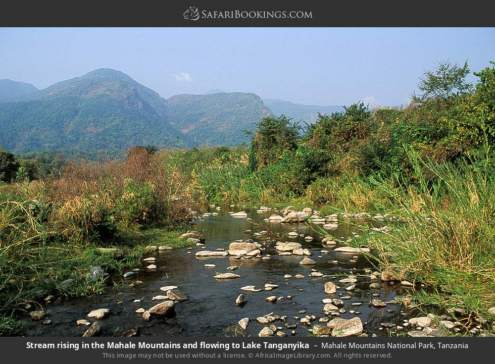 Stream rising in the Mahale Mountains and flowing to Lake Tanganyika in Mahale Mountains National Park, Tanzania