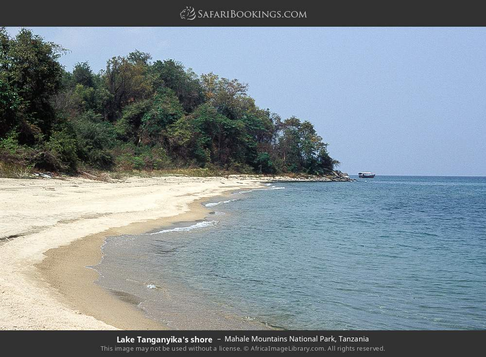 Lake Tanganyika's shore in Mahale Mountains National Park, Tanzania