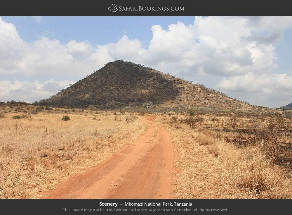 Scenery in Mkomazi National Park, Tanzania