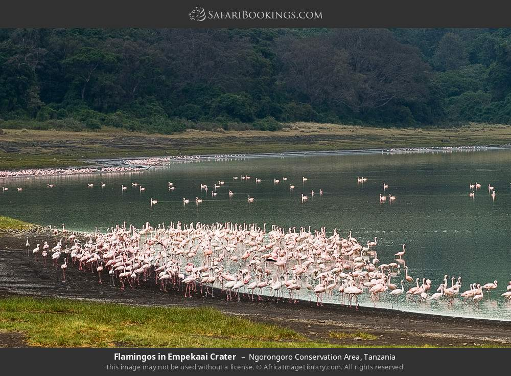Flamingos in Empekaai Crater in Ngorongoro Conservation Area, Tanzania