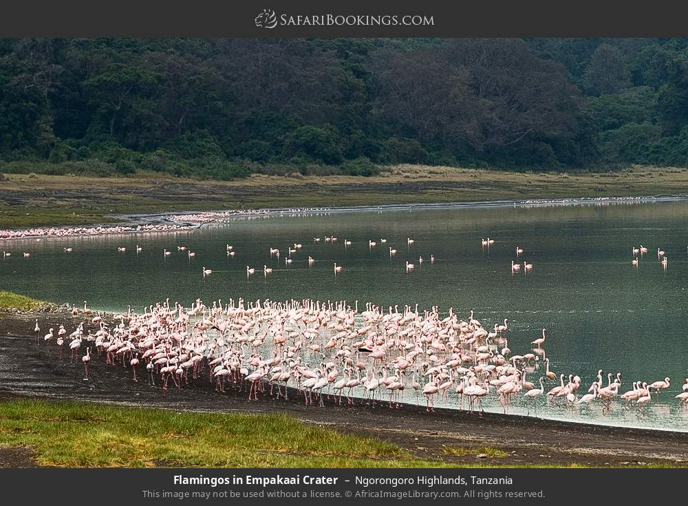 Flamingos in Empekaai Crater in Ngorongoro Highlands, Tanzania