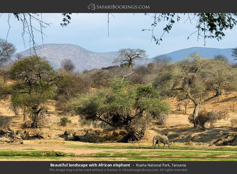 Beautiful landscape with African elephant in Ruaha National Park, Tanzania