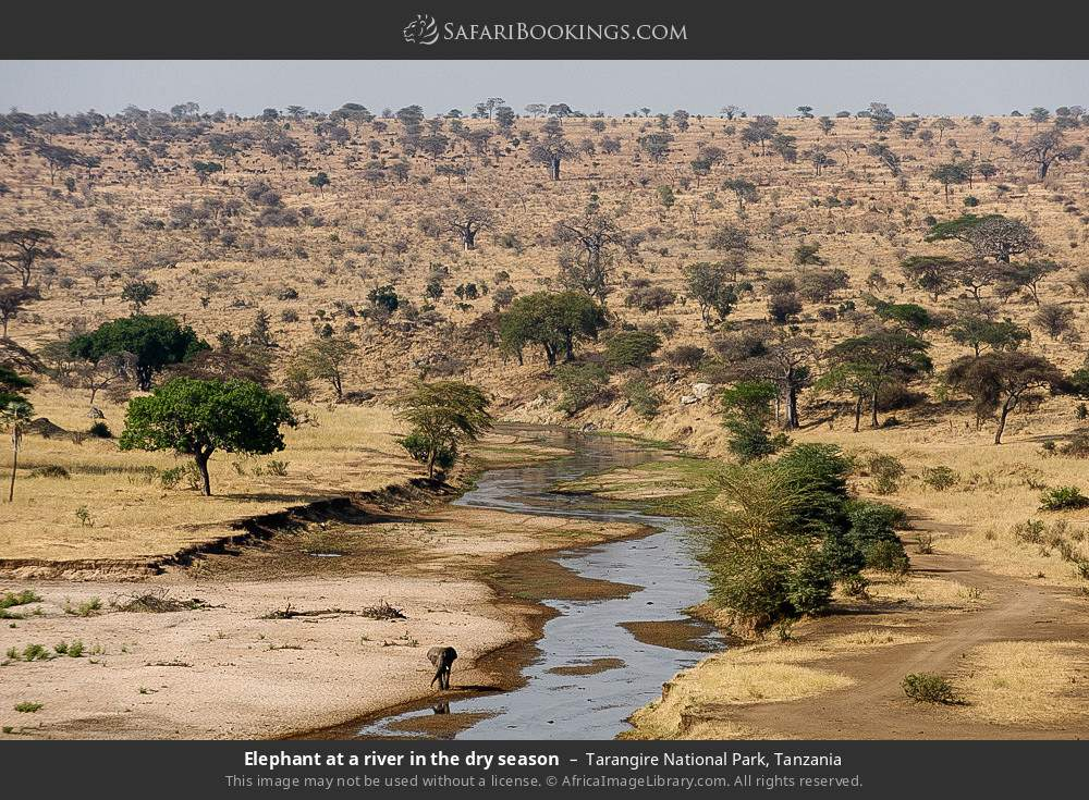 Elephant at a river in the dry season in Tarangire National Park, Tanzania