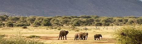 serengeti and zanzibar