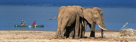 bush-and-forest/elephants