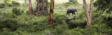 4-days safari in tanzania