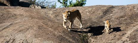 Tarangire Serengeti