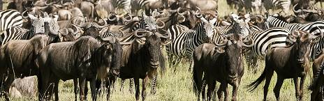honeymoon-safari