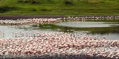 4-Day Awesome Safari to Manyara Ngorongoro & Serengeti