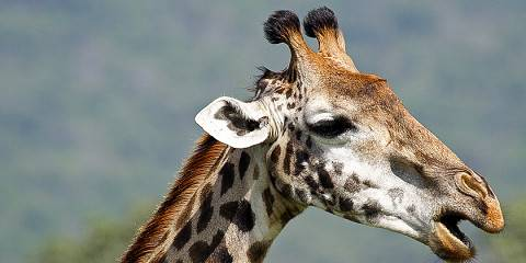 2-Day Safari Northern Tanzania - Tarangire & Ngorongoro