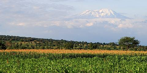 7-Day The Best of Lemosho Route - Mt Kilimanjaro
