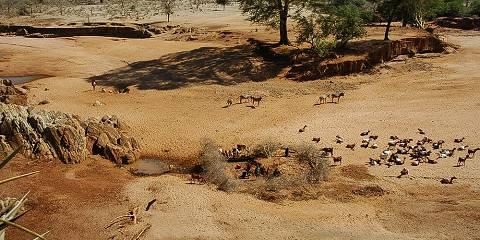 8-Day Serengeti Plains, Ngorongoro Crater and Tarangire