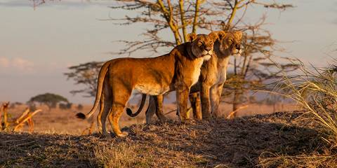 5-Day Lake Manyara|Serengeti|Ngorongoro-Budget-L/Cruiser