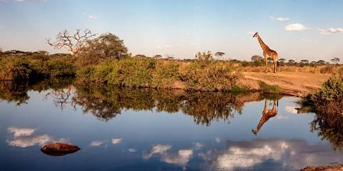 7-Day Tanzania Highlights Safari 2021