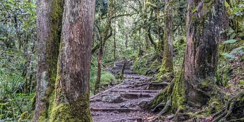 4-Day Tarangire/Serengti/Ngorongoro Camping