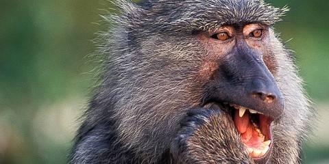 6-Day African Tanzania Wildlife Safari