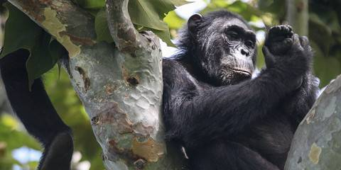 10-Day Southern Tanzania: Safari and Chimpanzee Trekk