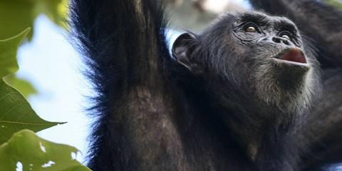 8-Day Tanzania | Big-5 Safari and Chimp Trekking