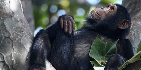 10-Day Classic Chimpanzee Safari