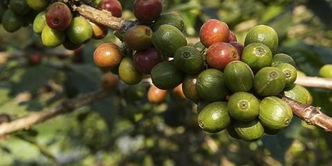 1-Day Kilimanjaro Coffee Tour