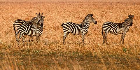 4-Day Joining Safari Tarangire, Serengeti & Ngorongoro