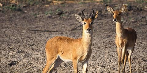 4-Day Bagamoyo & Saadani Safari