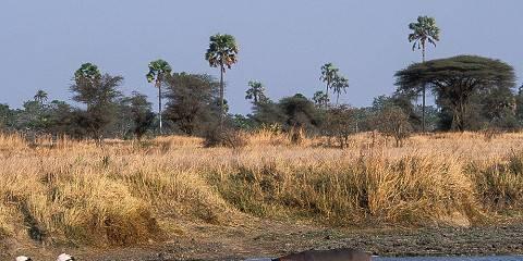 3-Day Selous Game Reserve, Boat, Car Drive & Walking