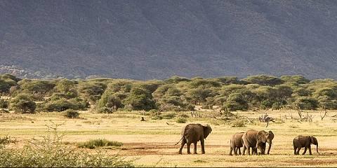 2-Day Group Safari to Tarangire and Ngorongoro