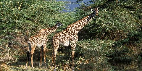 5-Day Enjoyable Budget Manyara, Ngorongoro, Serengeti