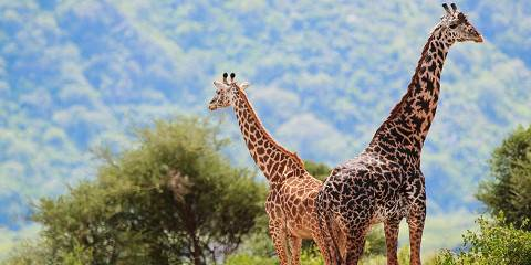 3-Day Safari to Lake Manyara Ngorongoro Crater Tarangire