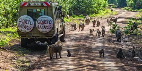 3-Day Masai Mara Private 4x4 Jeep Safari