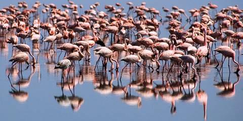 4-Day Tarangire, Ngorongoro & Manyara : Mid Range Tour