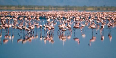 4-Day Astonishing Wildlife Experience