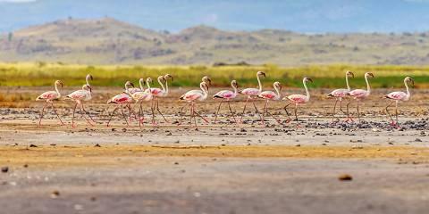 5-Day Manyara, Ngorongoro and Serengeti Luxury Tour