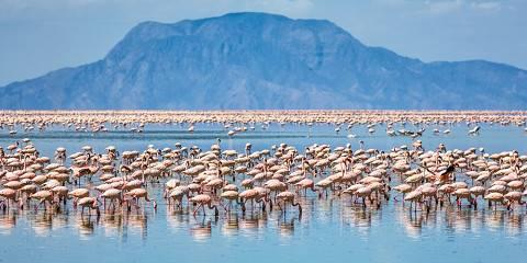 6-Day Arusha, Tarangire, Manyara, Serengeti & Ngorongoro