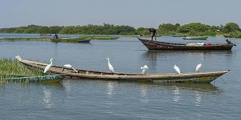 5-Day Uganda Fishing and Birding Safari